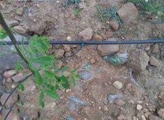 河南义马地区农业灌溉